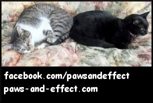 Paws and Effect - Thomas and Siouxsie