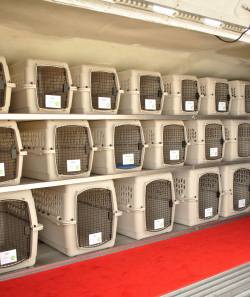 Pet Airways carriers inside plane