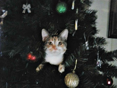 Pickles the cat in the Christmas tree
