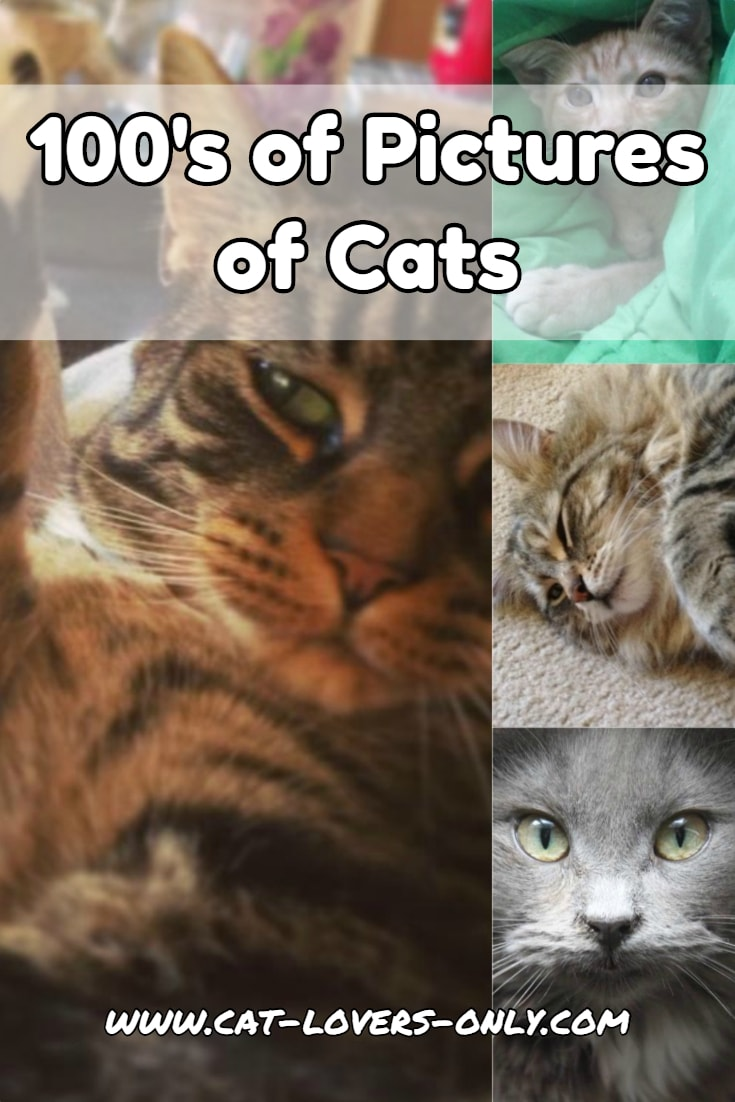 Multiple pics of cats with text overlay 100s of Pictures of Cats