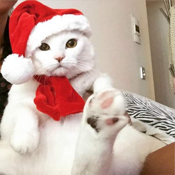 Pishi at Christmas