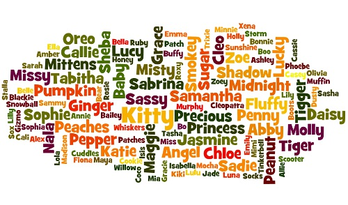 Popular female cat names word cloud