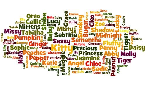 Popular female cat names word cloud