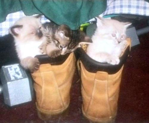 Kittens Prince William, Rambo and Dutchess