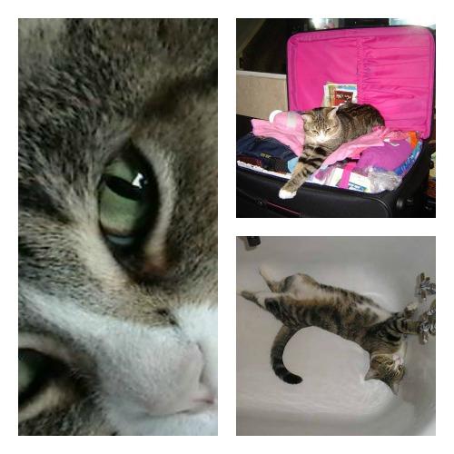 Princess the tabby cat