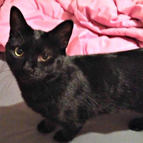 Princess the black cat.