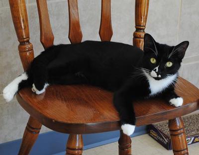 Kitty Soho