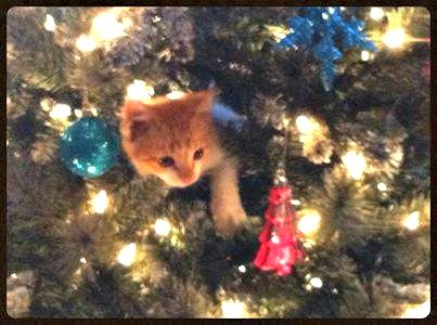 Rescue kitty in the tree