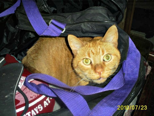 Rusty the traveling cat
