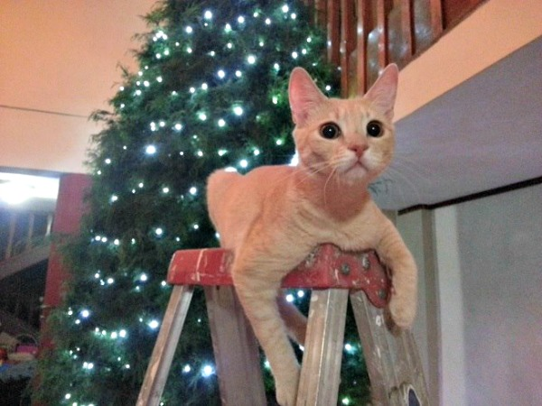 Sarah the cat on a ladder