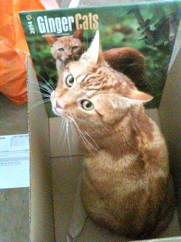 Sherbert in a box