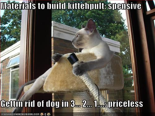 Siamese cat builds kittehpult