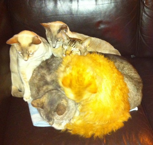 Silly cats on the couch
