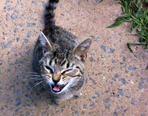 Tabby cat South Newton Township