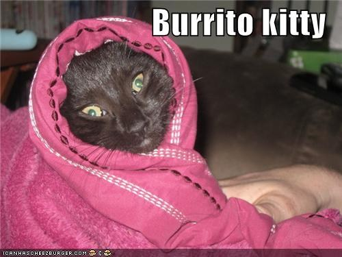 Stylish burrito kitty