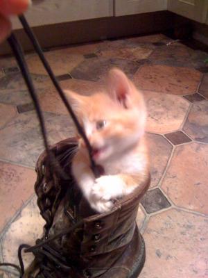 Tigger the Kitten4