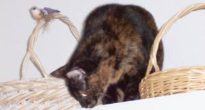 Teddie cat between baskets