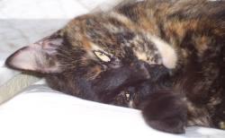 Teddie loves catnip