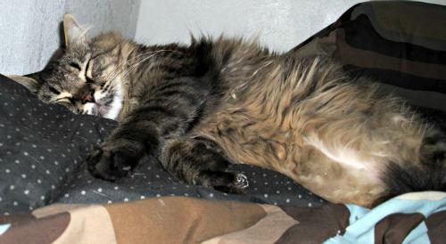 Thor sleeping