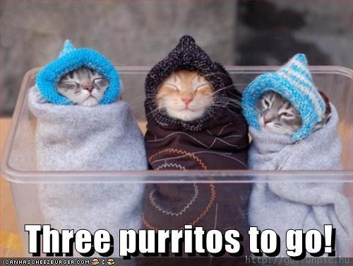 3 purritos to go