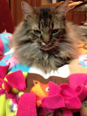 Tiffany's Cat Bed!
