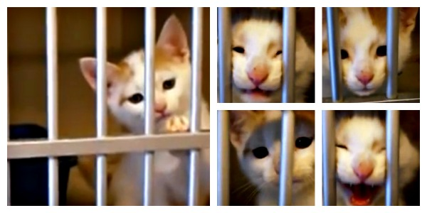 Tiger the kitten asks to be adopted