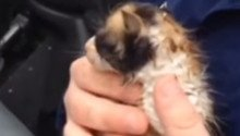 Weatherman rescues kitten from tornado rubble