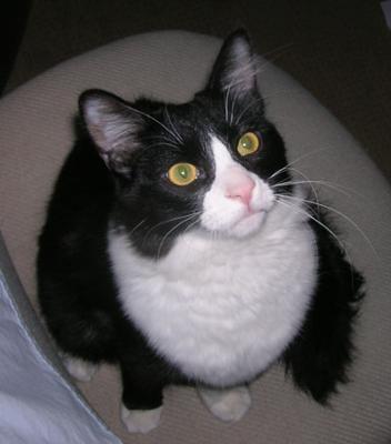 Tuxedo Bobby, a cute boy!