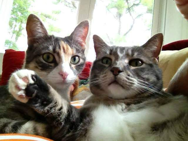Velie and Cleo posing
