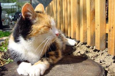 Calico Cat Mourns Tree