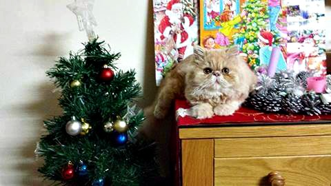 Zeus with his decorations