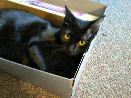 Zoey in a box