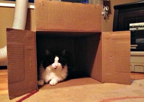 Yenco in a big box