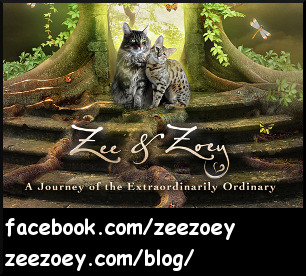 Zee & Zoey's Chronicle Connection